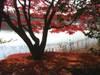 Shouwakinen20071201c