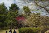 Koganei20080316c_2