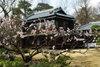 Koganei20080316e