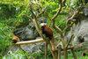 Lesser_panda20080430