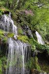 Toryu2010_0522kuri