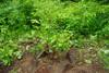 Juneberry2010_0626c