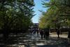 Yasukunijinjya2010_1103j