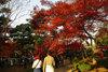 Goutokuji2010_1128b
