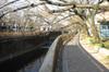 Sengawa2011_0108a