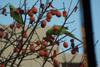 Yachou2011_0108a