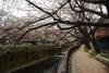Sengawa2011_0403d