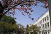 Senkyo2011_0424a