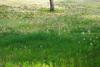Tanpopo2011_0521a_3