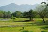 Yatsu2010_0521a_2