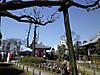 Shunbun2012_0320a