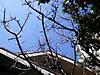 Ume2012_0325a