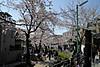 Ryokudou2012_0408a