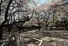 Bajikouen20140405i