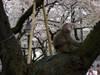 Kitazawaryokudou20070401b